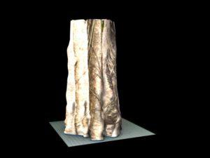 copac cu prima teztura 2